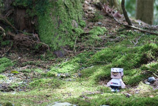 Otaku-san enjoying the gardens around Hakone Shrine, Mt Fuji area